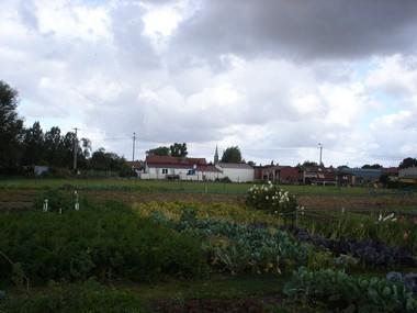 Haspres les jardins ouvriers for Jardin ouvrier